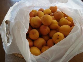 apricot 001.JPG