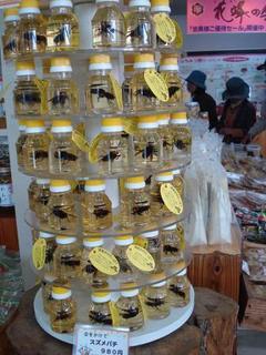 honey festival 013.JPG